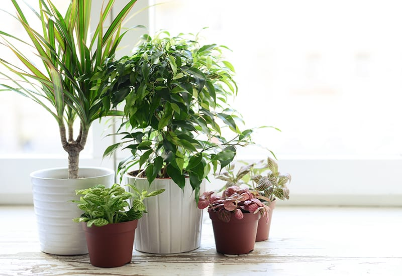 Add Life To Your Home With Indoor Decorative Plants