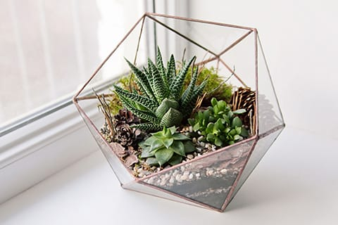 2017-decorating-with-houseplants-terrarium Home Goods Decorating Plants on home goods buildings, home goods spring, home goods table, home goods florida, home goods design, home goods light, home goods art, home goods butterfly, home goods products, home depot plant, home goods horse, home goods food, home decor plant,