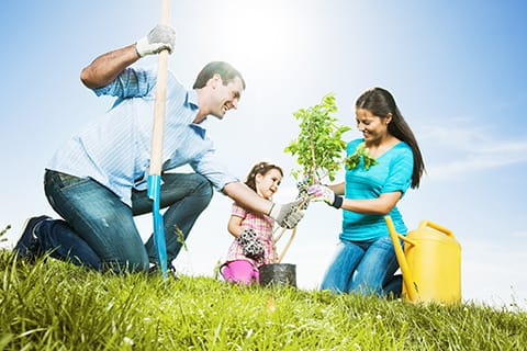 Plant trees - home improvement ideas
