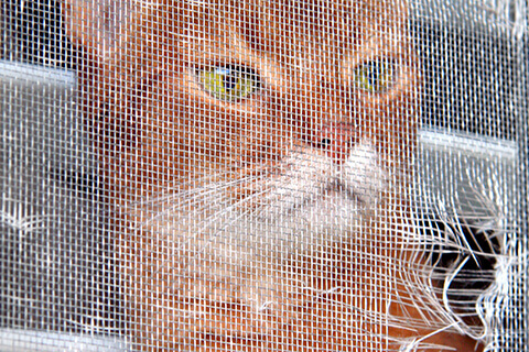 Pets can be hard on window screens